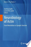 Neurobiology of Actin From Neurulation to Synaptic Function /  [electronic resource]