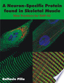 A Neuron-specific Protein Found in Skeletal Muscle [electronic resource]
